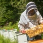 Scott McArt checks on honeycombs at Cornell's Dyce Lab for Honey Bee Studies in Ithaca.